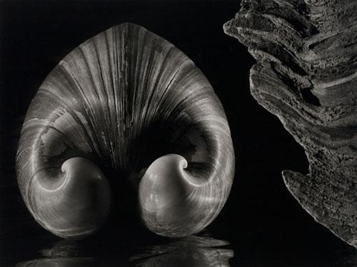 shell 1943.Jpeg