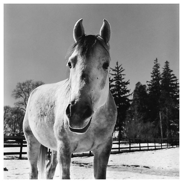 peter hujar horse 1983