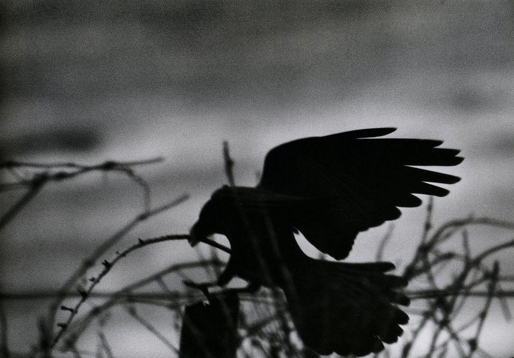 Ravens15