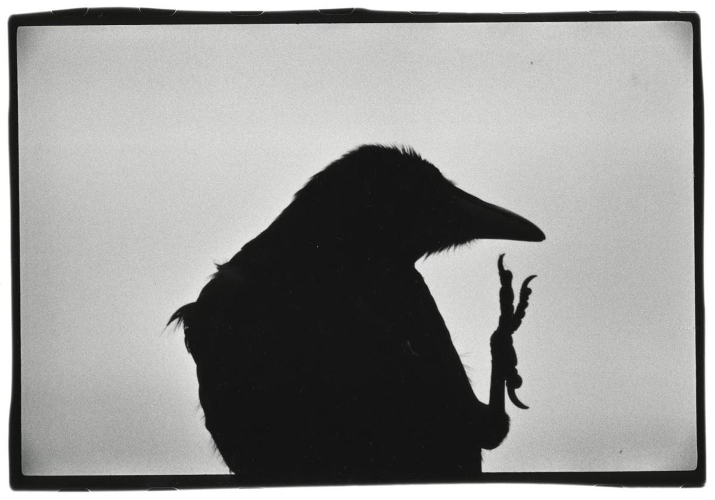 Ravens3