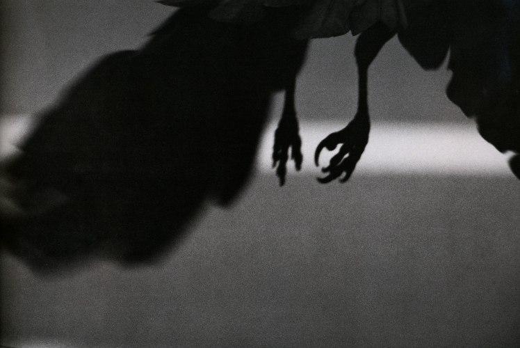 Ravens8