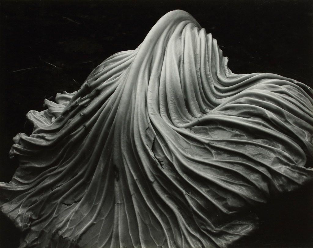 weston cabbage leaf 1931